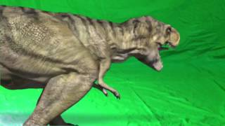 getlinkyoutube.com-T-Rex #2- Green Screen
