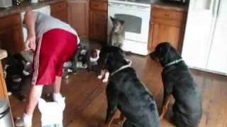 getlinkyoutube.com-كلاب مطيعة