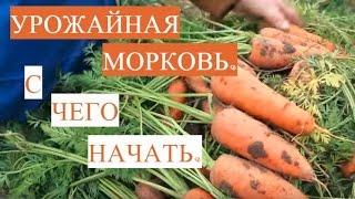 Отличная всхожесть семян! Как подготовить семена моркови к посадке