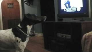 getlinkyoutube.com-funny dog video Empire Carpet Dog Howl-Jagger