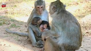 Wowo all babies monkeys are cute/ Animals lovely Youlike Monkey 1213