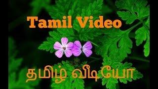 getlinkyoutube.com-தமிழ் வீடியோ Tamil Video - Free Food 101 - Herb Robert - Tumour Buster
