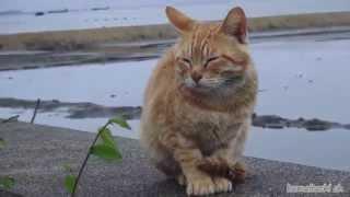 getlinkyoutube.com-【瀬戸の野良猫日記】2014 5 21 病院に連れて行ってもらった猫 Cat that I had take me to the hospital
