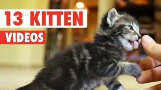 getlinkyoutube.com-13 Funny Kittens Video Compilation 2016