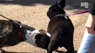 Pit bulls and parolees... and a french bulldog