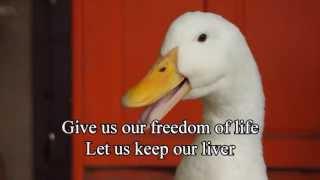 getlinkyoutube.com-Foie Gras - An Appetite for Cruelty!