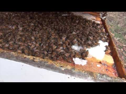 Feeding Bees In The Winter: Inspecting A Winter Bee Kind