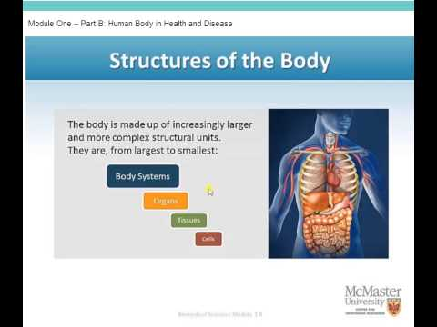 Human Body in Health and Disease