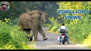 getlinkyoutube.com-Elephant Suddenly Appeared In Front of a Biker.