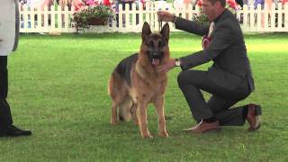 getlinkyoutube.com-Windsor Championship Dog Show 2011 Best in Show