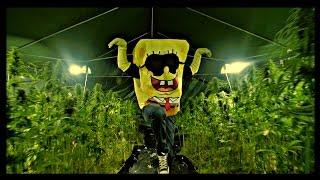 SPONGEBOZZ - Planktonweed ►Planktonweed Tape 17.04.2015◄ (Official 4K Video)