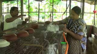 getlinkyoutube.com-Blessing Garden Rabbit Farm(MALAKKA,THRISSUR)