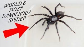 getlinkyoutube.com-WORLD'S MOST DANGEROUS SPIDER IN MY KITCHEN!!! Ann Reardon