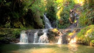 getlinkyoutube.com-Rainforest Relaxation Video 3 Hours in HD
