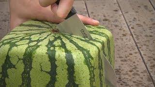 getlinkyoutube.com-Квадратные арбузы Японии / Square watermelons Japan / 四角スイカ