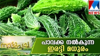 getlinkyoutube.com-Palakkadan methods in Bitter Gourd | Manorama News | Nattupacha