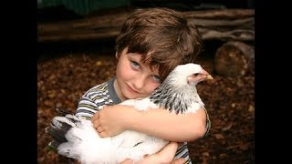 Cute Babies and Chicken are Best Friend - Funny Baby and Chickens Videos