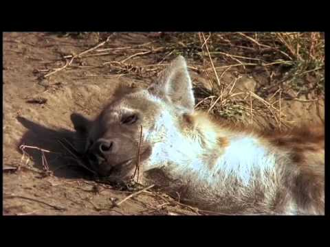 Tanzania Serengeti Best Of Part 1