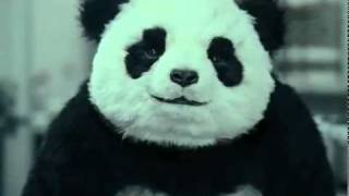 getlinkyoutube.com-Never say no to Panda!