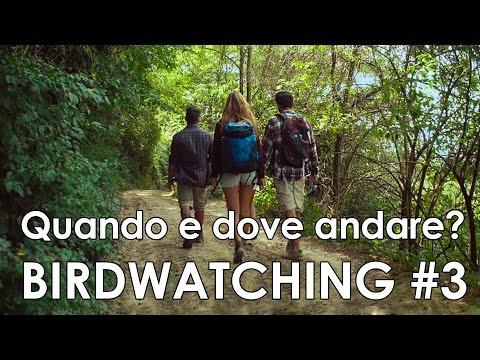 Video-corso di birdwatching #3 - Quando e dove andare