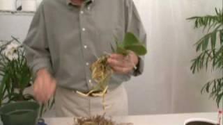 getlinkyoutube.com-Hydroponics for Orchids Part 2