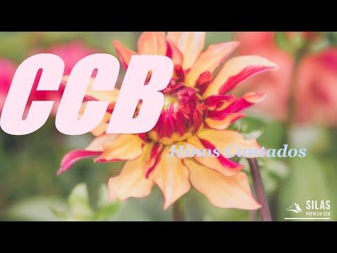 CCB. Hinos Antigos 332, 384, 446, 372, 103, 154, 92, 128, 222, 52, 189,138.