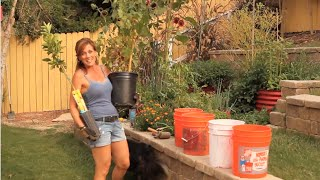 getlinkyoutube.com-Planting Grapevine and Lemon Tree in 5 Gallon Buckets - Quick and Easy