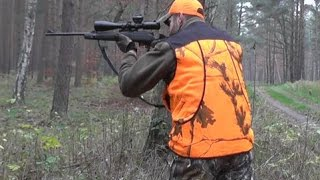 getlinkyoutube.com-WILD Jaeger Poland Drive Hunt (Drückjagd) BUSHNELL Season 1