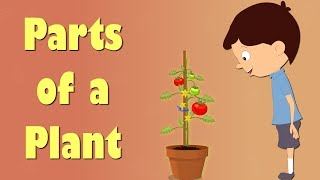 getlinkyoutube.com-Parts of a Plant | Videos for Kids