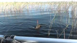 getlinkyoutube.com-Классная рыбалка и ловля крупного карася на поплавочную удочку В СЕКРЕТНОМ МЕСТЕ