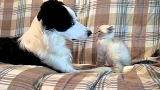 Gattino e cane giocano e si fanno le coccole