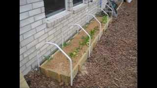 getlinkyoutube.com-Mittleider Gardening: How To Build A Mini Greenhouse