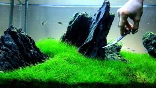 getlinkyoutube.com-Just Aquascaping - Flowgrow Aquascaping Scissors