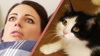 getlinkyoutube.com-10 Signs Your Cat Owns You