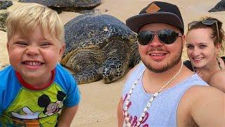 getlinkyoutube.com-FINDING ANCIENT SEA TURTLES!