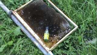 getlinkyoutube.com-Привой для пчел,посадка роя