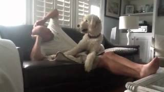 getlinkyoutube.com-Sweetest goldendoodle ever!