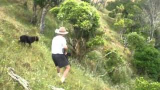 getlinkyoutube.com-Peacock Hunting in New Zealand
