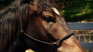 getlinkyoutube.com-America's Wild Mustang-Untamed Legacy PBS Documentary