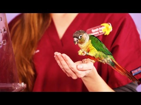 How Long Do Birds Live? | Pet Bird