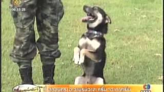 getlinkyoutube.com-เจ้าบัวลอยสุนัขฉลาดแสนรู้