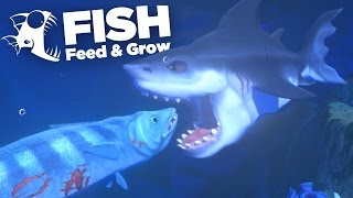 BARRACUDA ATTACK!!! - Feed And Grow | Ep4