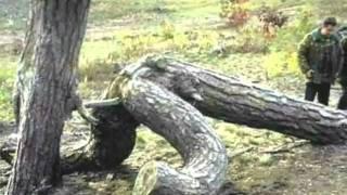 نشانه های سکس در طبیعت