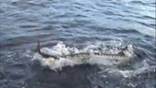 getlinkyoutube.com-Barracuda Attack