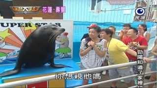 getlinkyoutube.com-2012-07-29-HD綜藝大集合-花蓮壽豐-超可愛海獅親孟姿也會認正妹和美女
