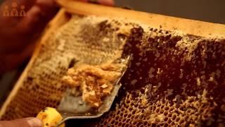 getlinkyoutube.com-Proces výroby agátového medu - František Rémes