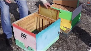 getlinkyoutube.com-Despre eficienta sporita a ramei claditoare (instrument natural de lupta impotr. varroa) la Bio Stup