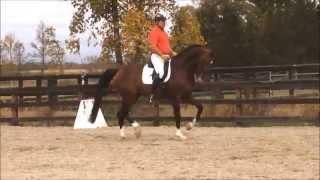 getlinkyoutube.com-Aliano Holsteiner stallion-Holsteiner Inspection