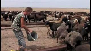 getlinkyoutube.com-Стратегия животноводства.