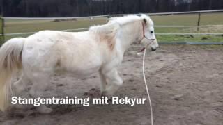 04.02.2017 - Stangentraining mit Reykur